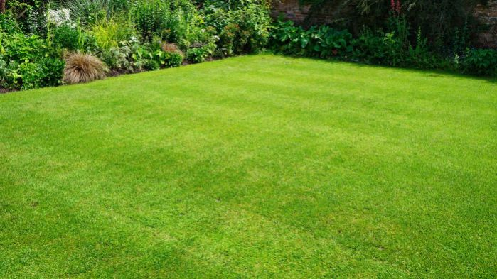 Can Mowing My Grass Help It Spread To Bare Spots On My Lawn