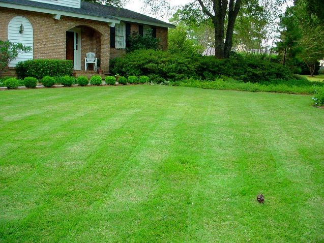Frequently Asked Questions About Mowing Grass To Help It Spread