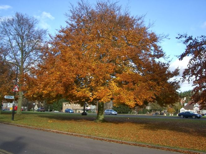 autumnal trees, losing leaves